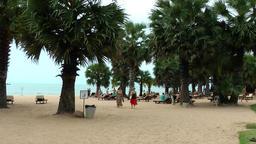 Thailand Pattaya 020 ravindra beach resort, wide sand area with palm trees Footage