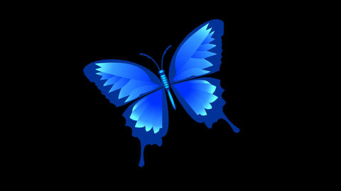 Isolated blue butterfly animated with alpha matte Stock Video Footage