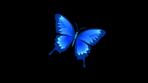 Isolated blue butterfly animated with alpha matte Animation