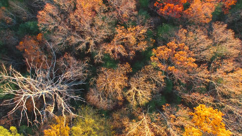 Aerial Over Fall Colors,Mountain Road and River, 4K Footage