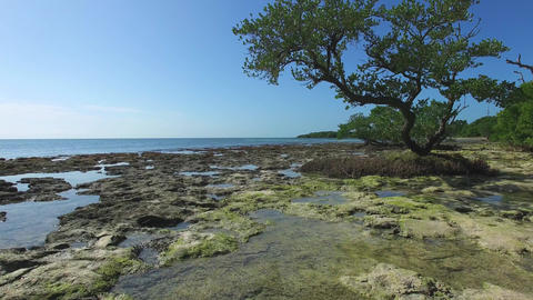 Aerial Over Rocky Tide-Pool Under Low Tree, 4K Live Action