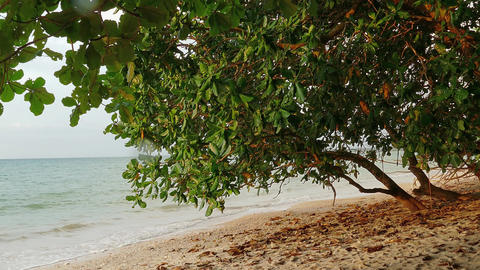 Landscape with beach and sea in Khao Lak, Thailand Footage