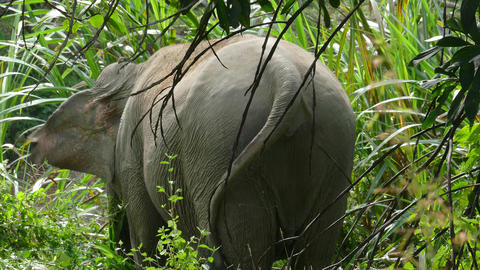 Rear view of an elephant in jungle, 4k Footage