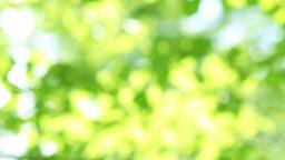 Fresh green 004 Footage