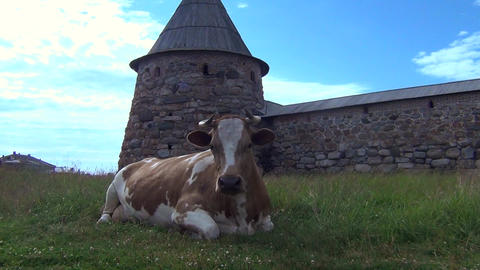 Cow in front of a fortress Footage