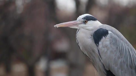 a egret Footage