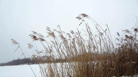 Winter grass Filmmaterial