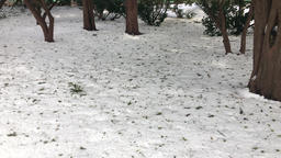 Snow covered ground and tree trunks Footage