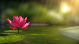 Lotus Background 0