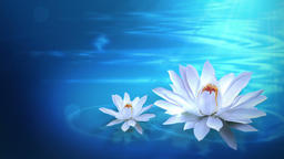 Lotus Background (4) CG動画素材