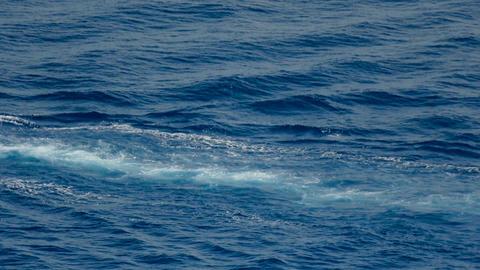 Wake in open ocean Footage