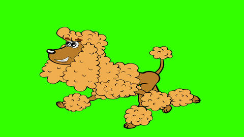 Cartoon Poodle Running: 4K UHD CG動画素材