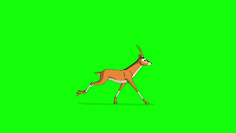 Gazelle Antelope Runs. Animated Motion Graphic Isolated on Green Screen Animation