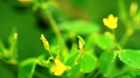 small yellow flowers. shot slider Stock Video Footage