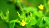 small yellow flowers. shot slider Footage