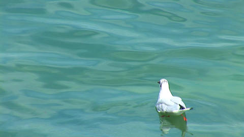 gull Stock Video Footage