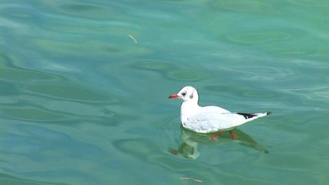 gull Footage