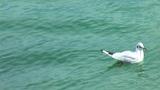 gull g 5 Footage