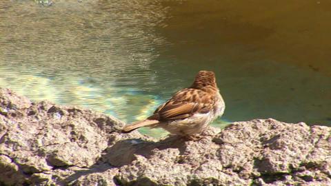 sparrow 2 Stock Video Footage
