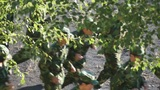 Military training of Chinese students 04 Footage