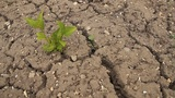 Dry ground Footage
