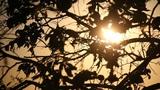 Tree Light Slider Footage
