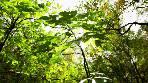 Close-up of Tree Leaves Footage