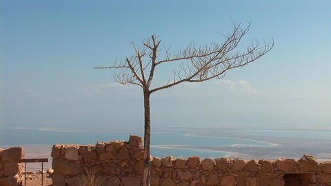 dead tree at the fortress of Masada Stock Video Footage