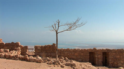 dead tree at the fortress of Masada Footage