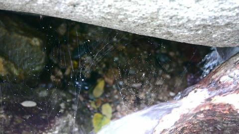 spider web cobwebs beside streams Stock Video Footage