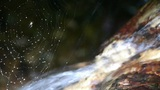 spider web cobwebs beside streams water Footage