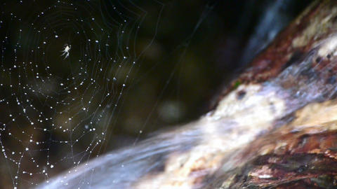 spider web cobwebs beside streams water Stock Video Footage