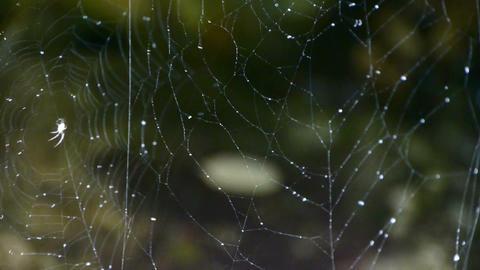 spider web cobwebs beside streams water Stock Video Footage