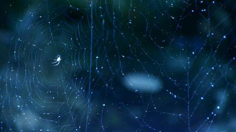 spider web cobwebs beside streams water in snow Stock Video Footage