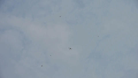 Dragonfly flying in the sky Stock Video Footage