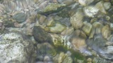 pebbles,fish & gravel under water,reflection on water,river stream on valley Footage