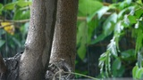 Tree in rain,lush foliage leaves Footage