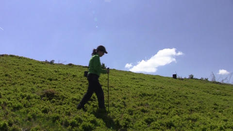 Woman descends a slope with blueberries while walking through nature 09 Footage