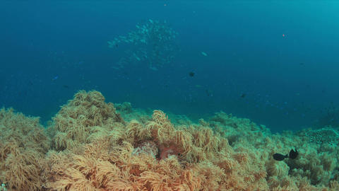 Coral reef with plenty fish 4k Filmmaterial