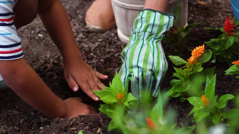 Siblings gardening and planting flowers in garden Live Action