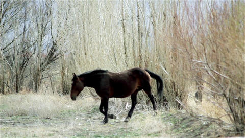 Foal Following His Mother In The Forest Footage