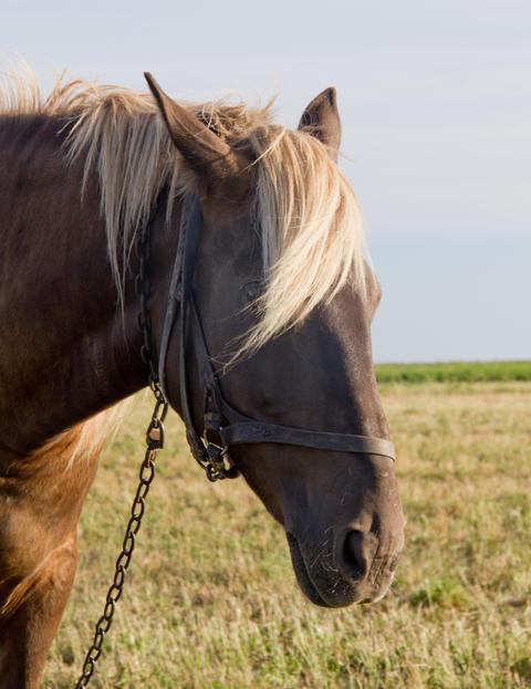 Horse on Pasture Photo