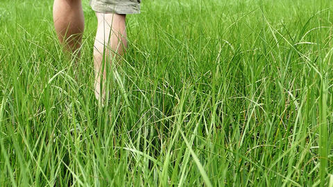 Man walks inside grass slow motion Footage
