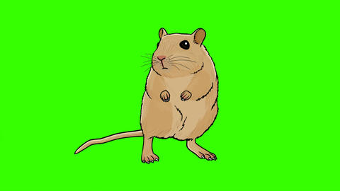 Animated Hamster: Green Screen + Matte, Looping Animation