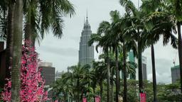 Malaysia Kuala Lumpur 033 petronas towers behind palms and pink trees Footage