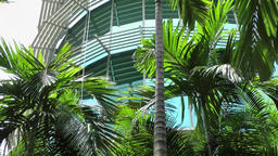 Malaysia Kuala Lumpur 036 green palm trees around office building Footage