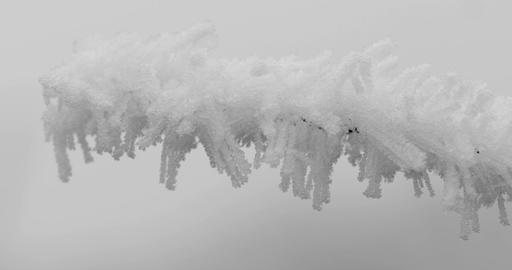Ice frozen on branch bush Footage