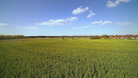 Aerial view of a field of oilseed rape in spring Footage