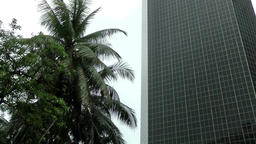 Malaysia Kuala Lumpur 047 palm tree and skyscraper in the rain Footage