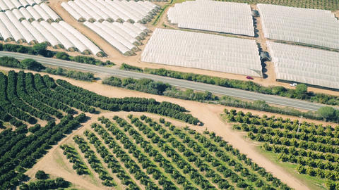 Aerial View Fruit and Orange Trees Plantation Footage